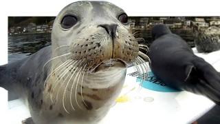 小海豹衝浪影片