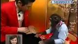 魔術師戲耍黑猩猩影片