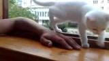 可愛貓咪不讓主人手臂放在窗外影片