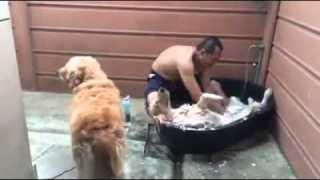 狗狗躺著洗澡好享受影片
